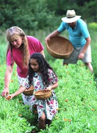 Nancy, Michael and Gracie Phillips: picking calendula, a healing herb -- photo: Geoff Forester