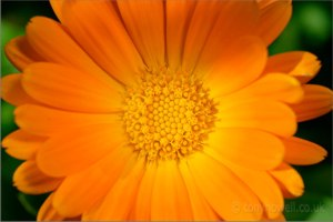 Apothocary: Herbal Remedies (& more) from Heartsong Farm Healing Herbs